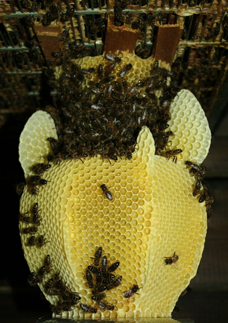 studio_libertiny_made_by_bees_honeycomb_vase_4_preview2.jpg