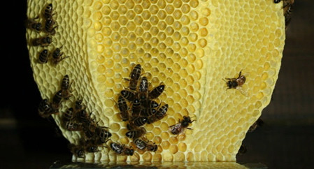 studio_libertiny_made_by_bees_honeycomb_vase_4_previewc.jpg