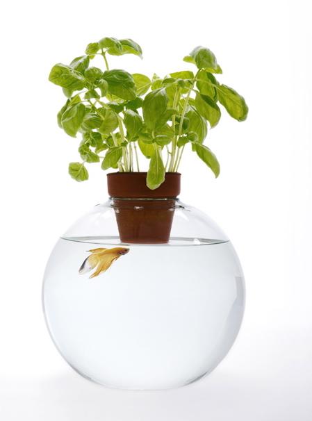 web-fishbowl-above-water.jpg