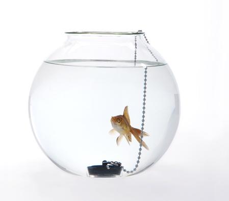 web-fishbowl-dont-piss-me-off.jpg