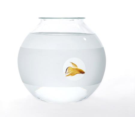 web-fishbowl-private-matters.jpg