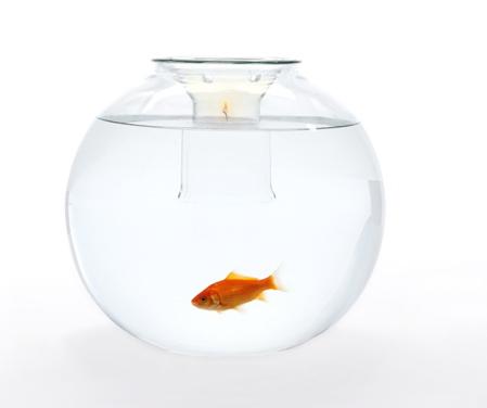 web-fishbowl-under-candle-light.jpg