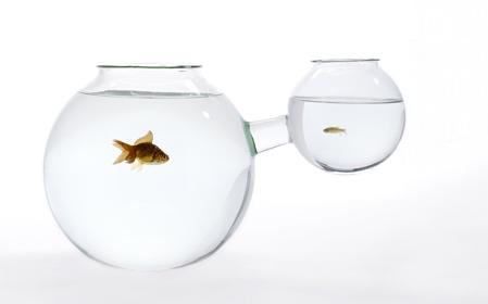 web-fishbowl-xs-or-xl.jpg
