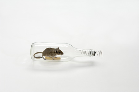 mouse-in-a-bottle-2-web.jpg