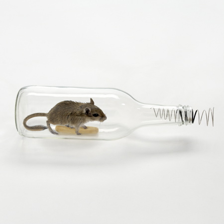 mouse-in-a-bottle_sq.jpg
