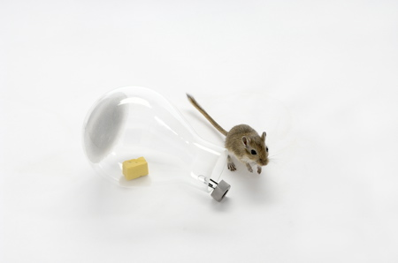 mouse-in-a-lightbulb-1-web.jpg