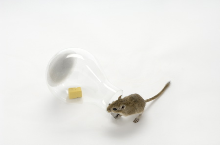 mouse-in-a-lightbulb-2-web.jpg