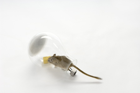 mouse-in-a-lightbulb-3-web.jpg