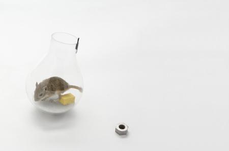 mouse-in-a-lightbulb-4-web.jpg