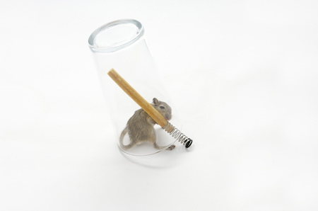 mouse-in-a-pint-1-web.jpg