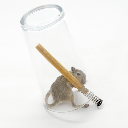 mouse-in-a-pint-1-web_sq.jpg