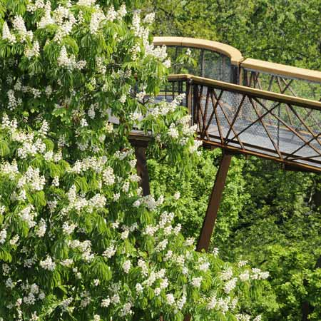 Kew Tree Top Walkway by Marks Barfield Architects