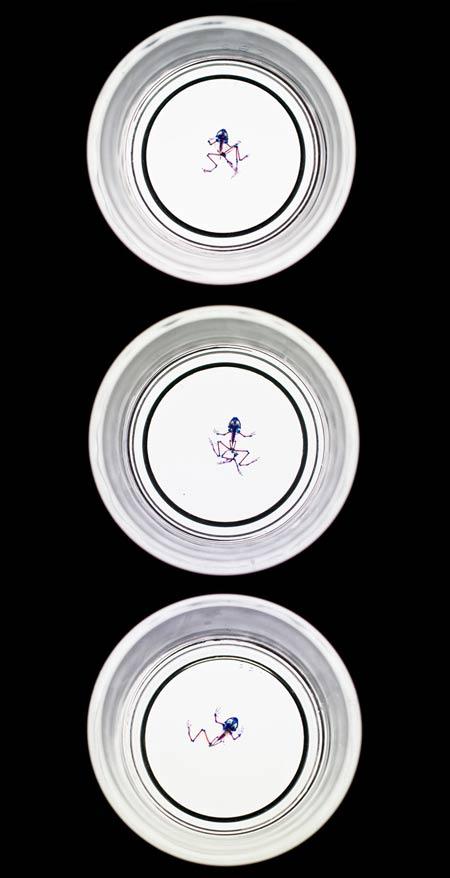 1-water-plate-total.jpg