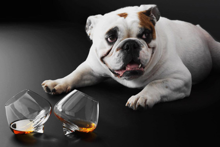 cognac-cognac-glass-and-dog-2.jpg