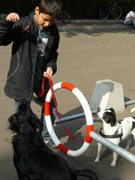 dogs-at-droog-citydog3.jpg