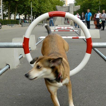 squ-dogs-at-droog-citydog-3.jpg