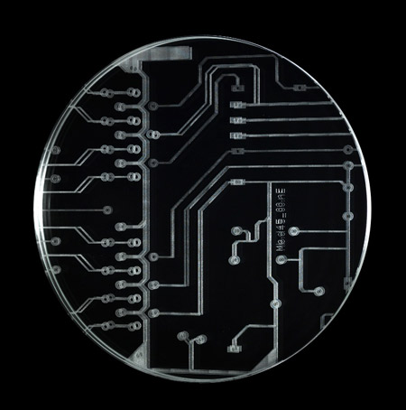 motherboard-by-romolo-stanco-10.jpg
