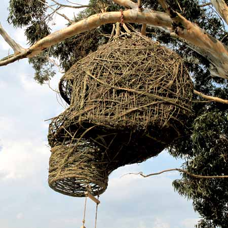 Weaver's Nest by Animal Farm