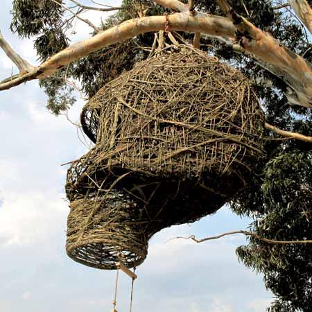 Weaver's Nest by Animal Farm