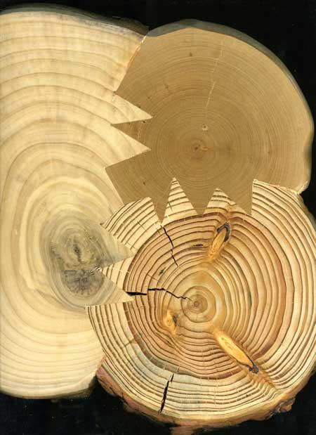 Мебель для ёлки от Fabien Cappello