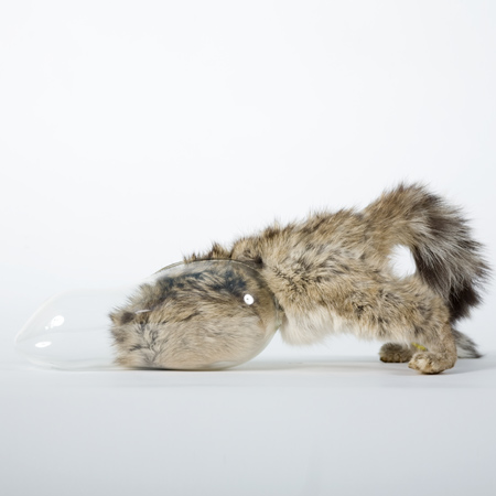 taxidermy-by-idiots-55.jpg