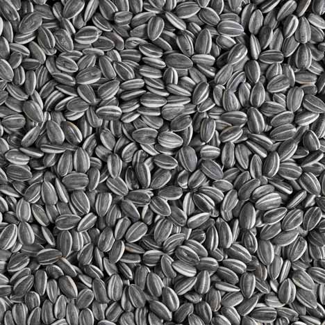 Sunflower Seeds 2010 by Ai Weiwei