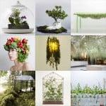 New Pinterest board:  plants