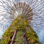 """We wanted real drama in a flat landscape"" - Paul Baker on Gardens by the Bay"