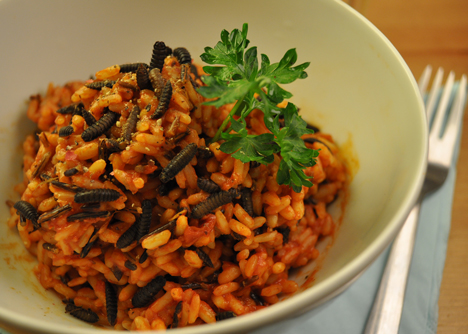 Larvae and tomato risotto by Katharina Unger