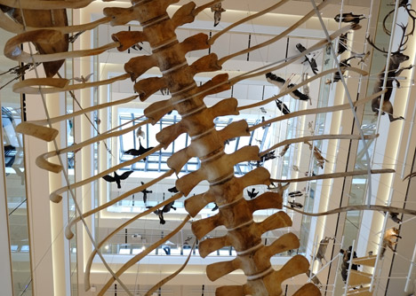 MuSe Museum by Renzo Piano