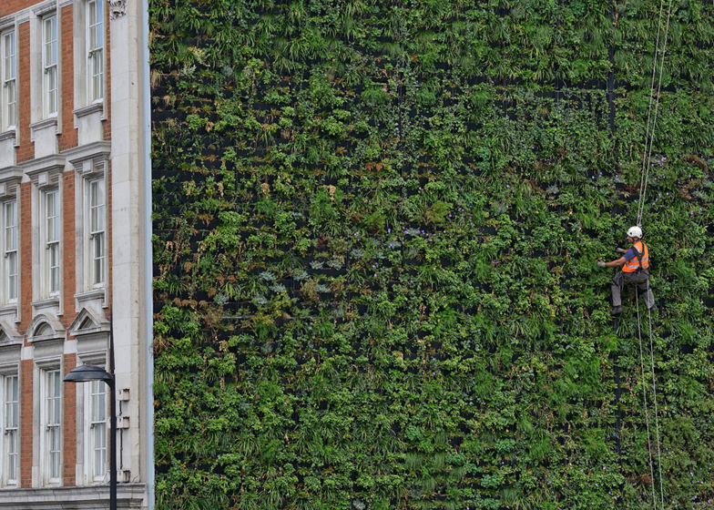 London's largest living wall designed to reduce urban flooding.