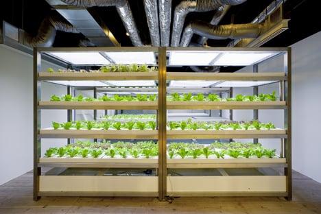 Pasona Urban Farm