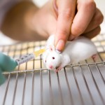 """3D-printed human cells could """"replace animal testing"""""""