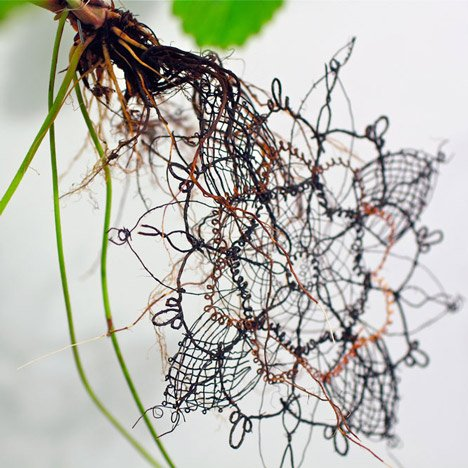 Genetically engineered crops could grow lace amongst their roots