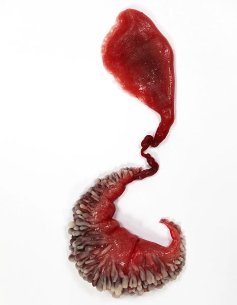 Circumventive Organs by Agatha Haines