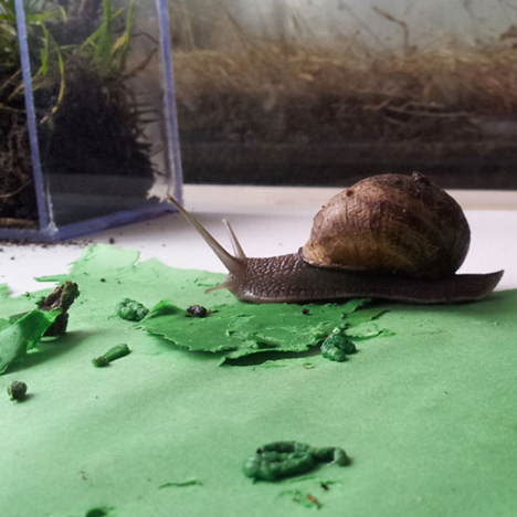 Snail Poo project by Lieske Schreuder