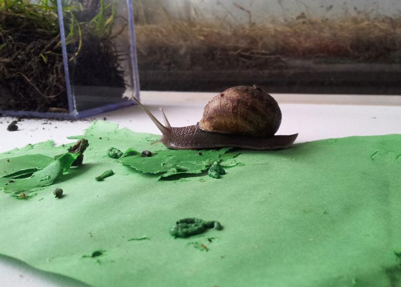 Snail Poo project by Lieske Schreuder
