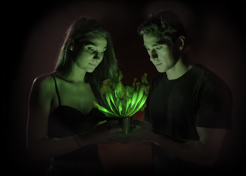 American firm genetically engineers world's first glow-in-the-dark plant