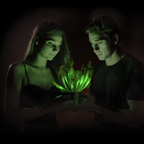 World's first glow-in-the-dark plant genetically engineered
