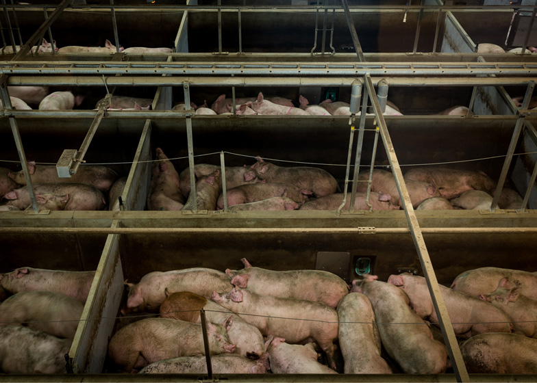 Danish Crown Slaughterhouse photography by Alastair Philip Wiper