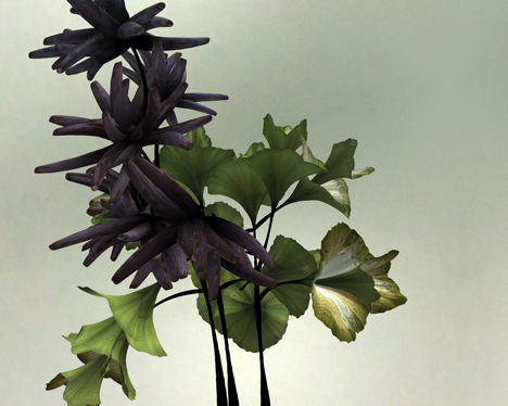 Digital flower animation by Daniel Brown based on exhibits at Dundee museum