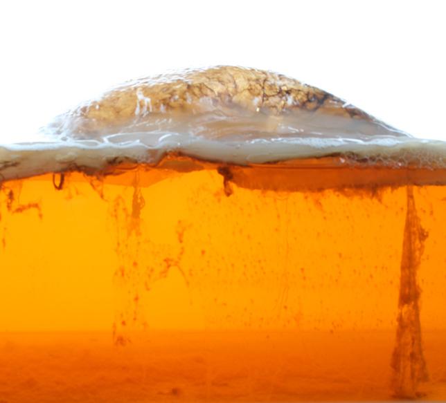 BioCouture material