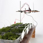 "Moss used as ""biological solar panels"" to power a radio"
