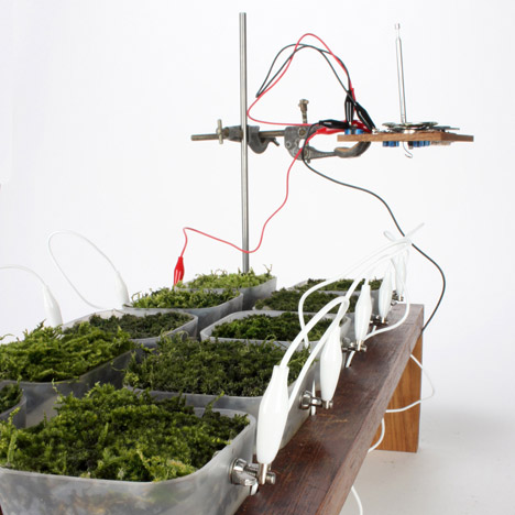 """Moss used as """"biological solar panels"""" to power a radio"""