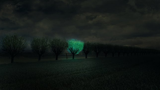 Glowing-Tree-Roosegaarde-Dezeen_644