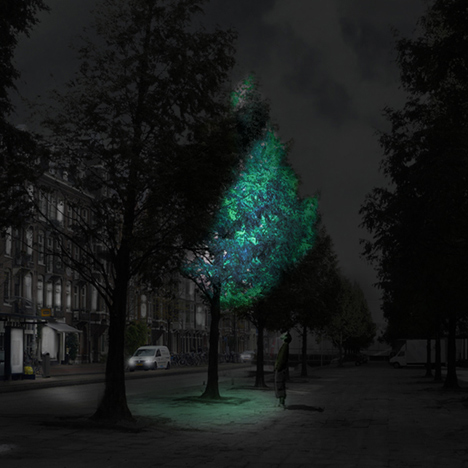"Glowing trees could be used ""instead of  street lighting"" says Daan Roosegaarde"