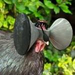 "Virtual reality headsets create ""pastoral"" illusion for battery-farmed chickens"