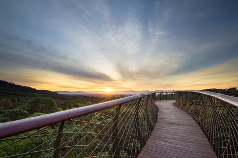 The Boomslang canopy walkway by Kirsten Bosch