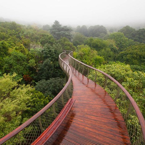 Boomslang walkway by Mark Thomas and<br /> Henry Fagan extends over a forest canopy