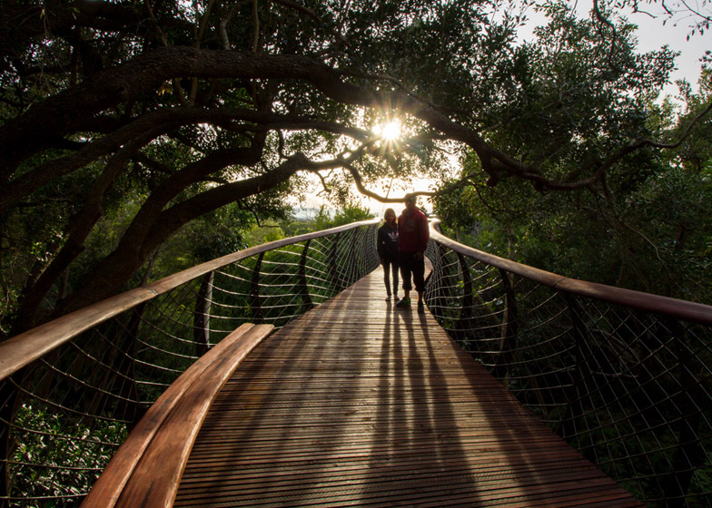The Boomslang canopy walkway by Mark Thomas and Henry Fagan
